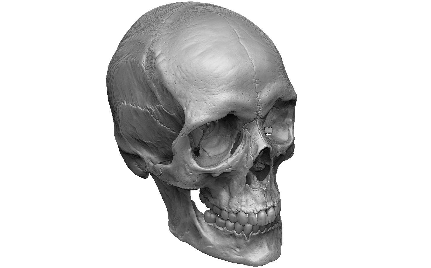 Female human skull- realistic 3d print model- 3 scales set 3D print model