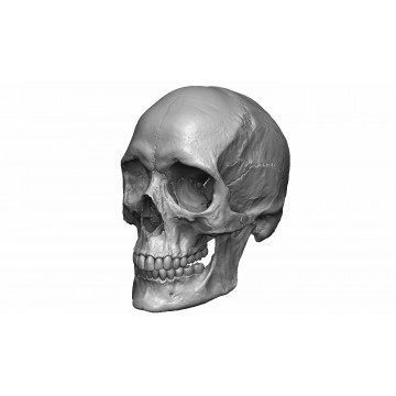 Female human skull- realistic 3d print model- 3 scales set 3D print model