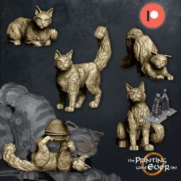 House Cats - 5 poses